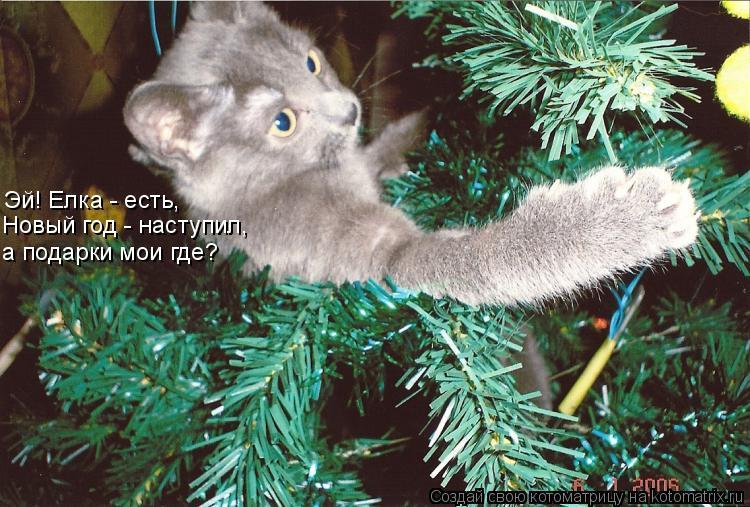 Котоматрица: Эй! Елка - есть,  Новый год - наступил,  а подарки мои где?