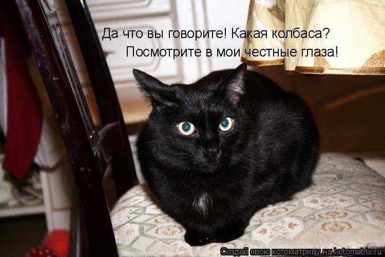 Котоматрица: Да что вы говорите! Какая колбаса?  Посмотрите в мои честные глаза!
