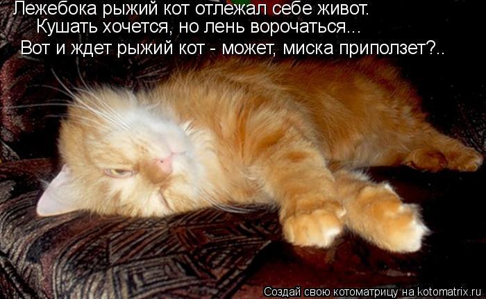 Котоматрица: Лежебока рыжий кот отлежал себе живот.   Кушать хочется, но лень ворочаться...   Вот и ждет рыжий кот - может, миска приползет?..