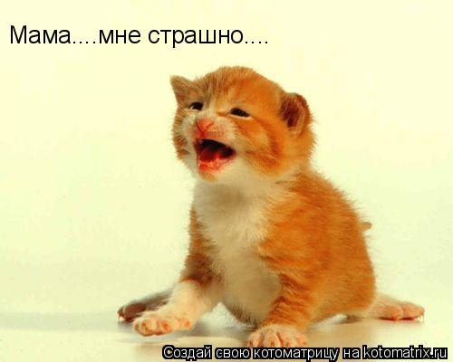 Котоматрица: Мама....мне страшно....