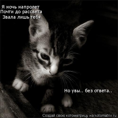 Котоматрица: Я ночь напролет Почти до рассвета Звала лишь тебя Но увы.. без ответа..