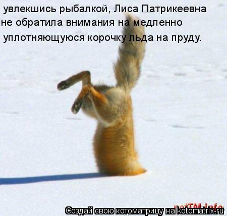 Котоматрица: увлекшись рыбалкой, Лиса Патрикеевна не обратила внимания на медленно  уплотняющуюся корочку льда на пруду.