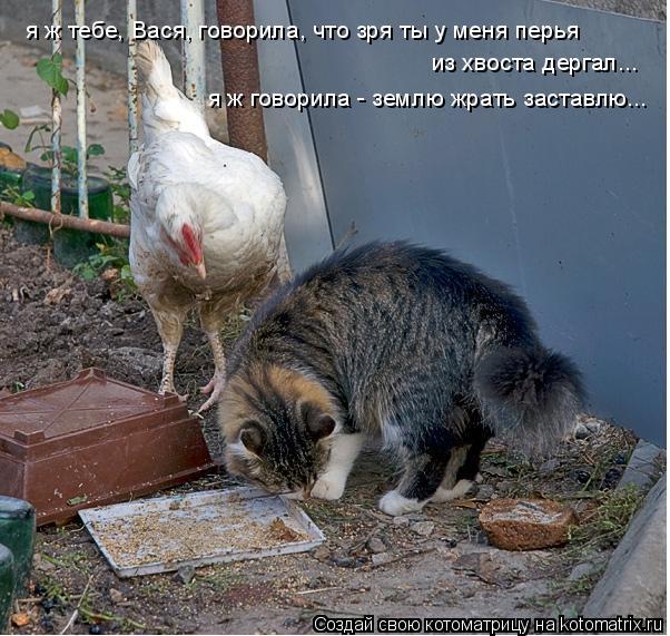 Котоматрица: я ж тебе, Вася, говорила, что зря ты у меня перья из хвоста дергал... я ж говорила - землю жрать заставлю...