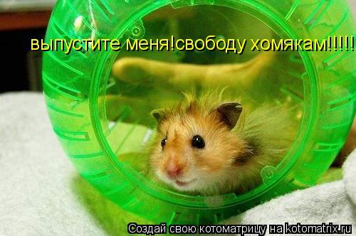 Котоматрица: выпустите меня!свободу хомякам!!!!!