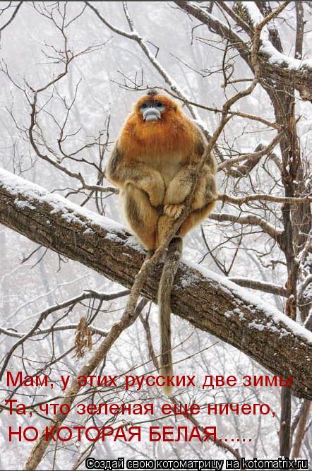 Котоматрица: Мам, у этих русских две зимы Та, что зеленая еще ничего, НО КОТОРАЯ БЕЛАЯ......