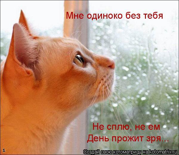 Котоматрица: Не сплю, не ем День прожит зря... Мне одиноко без тебя