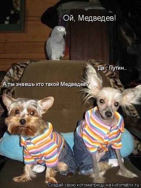 Котоматрица: — Ой, Медведев!  А ты знаешь кто такой Медведев?  Да — Путин..