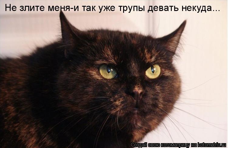 Котоматрица: Не злите меня-и так уже трупы девать некуда...