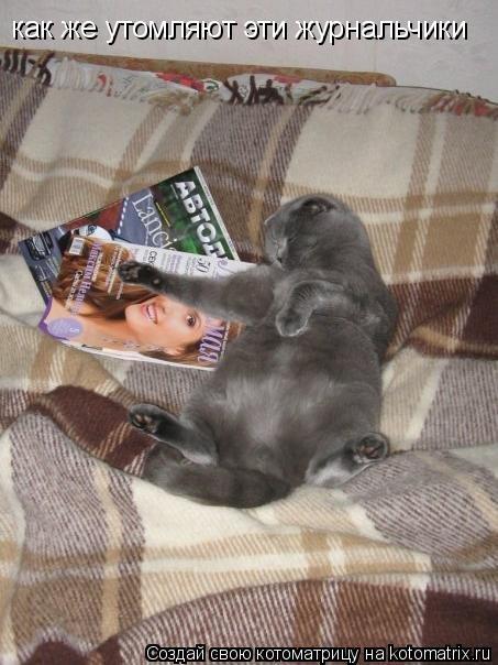 Котоматрица: как же утомляют эти журнальчики