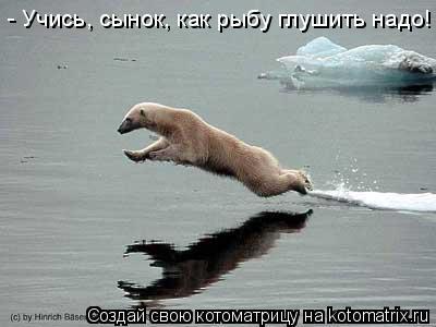 Котоматрица: - Учись, сынок, как рыбу глушить надо!