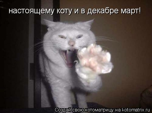 Котоматрица: настоящему коту и в декабре март!