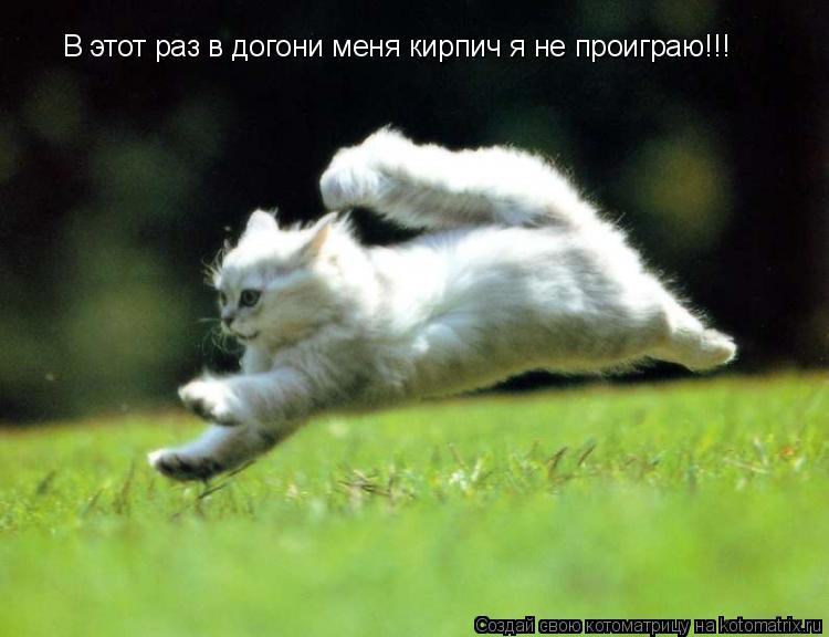 Котоматрица: В этот раз в догони меня кирпич я не проиграю!!!