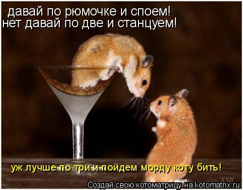 Котоматрица: давай по рюмочке и споем! нет давай по две и станцуем! уж лучше по три и пойдем морду коту бить!