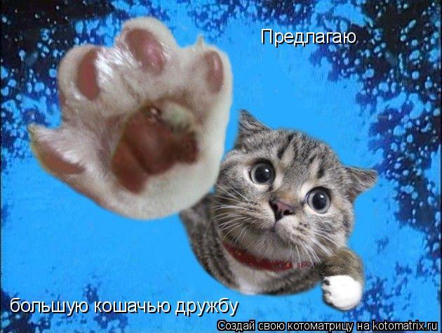 Котоматрица: Предлагаю  большую кошачью дружбу