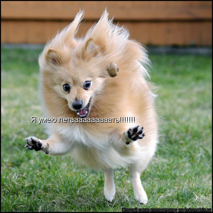 Котоматрица: Я умею летаааааааааать!!!!!!!
