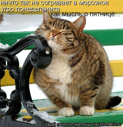 Котоматрица: ничто так не согревает в морозное утро понедельника как мысль о пятнице...