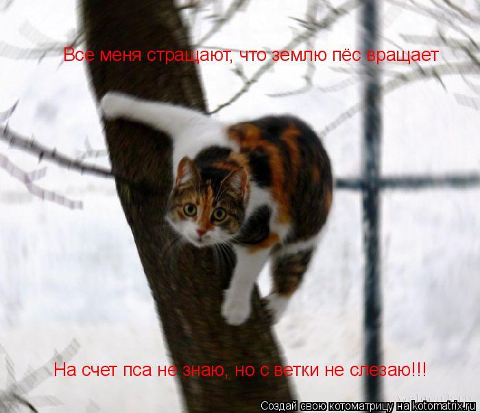 Котоматрица: Все меня стращают, что землю пёс вращает На счет пса не знаю, но с ветки не слезаю!!!
