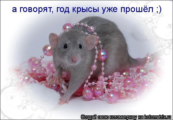 Котоматрица: а говорят, год крысы уже прошёл ;)