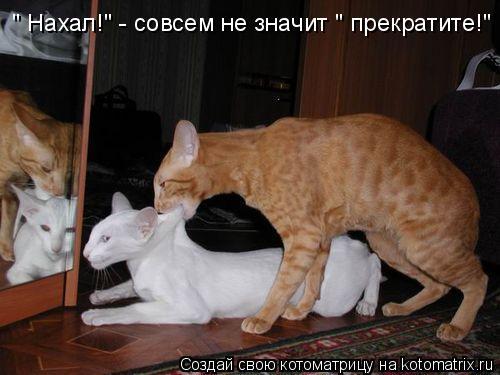 "Котоматрица: "" Нахал!"" - совсем не значит "" прекратите!"""