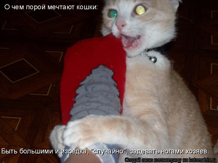 """Котоматрица: О чем порой мечтают кошки:  Быть большими и изредка, """"случайно"""", задевать ногами хозяев."""