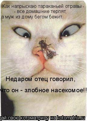 Котоматрица: Как напрыскаю тараканьей отравы - - все домашние терпят, а муж из дому бегом бежит. Недаром отец говорил, что он - злобное насекомое!!!
