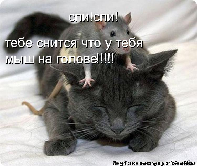 Котоматрица: спи!спи! тебе снится что у тебя  мыш на голове мыш на голове !!!!!