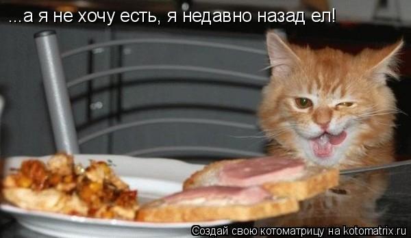 Котоматрица: ...а я не хочу есть, я недавно назад ел!