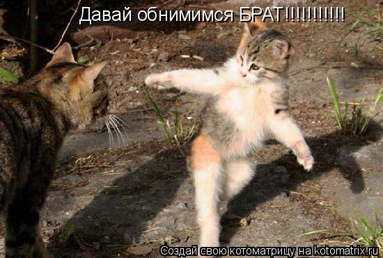 Котоматрица: Давай обнимимся БРАТ!!!!!!!!!!!