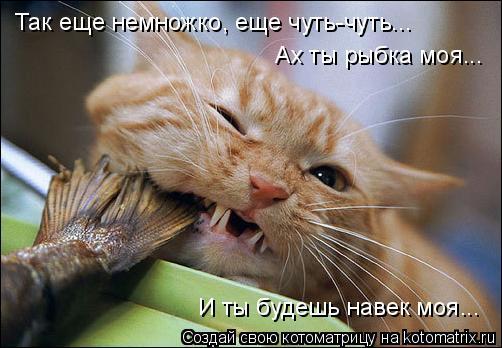 Котоматрица: Так еще немножко, еще чуть-чуть... Ах ты рыбка моя... И ты будешь навек моя...