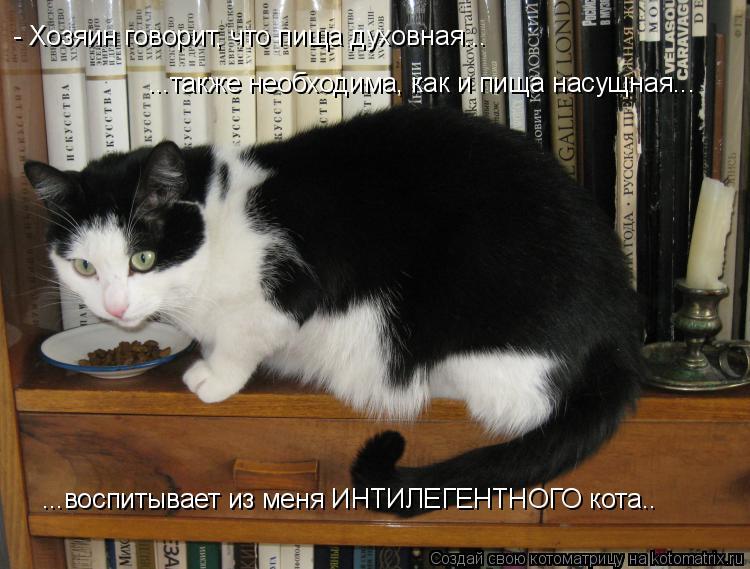 Котоматрица: - Хозяин говорит, что пища духовная... ...также необходима, как и пища насущная... ...воспитывает из меня ИНТИЛЕГЕНТНОГО кота..