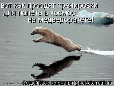 Котоматрица: вот как проодят тренировки  для полёта в космос на медведоракете!
