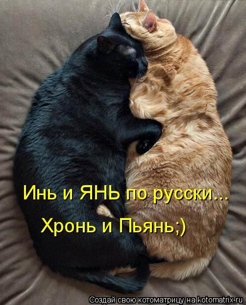 Котоматрица: Инь и ЯНЬ по русски... Хронь и Пьянь;)