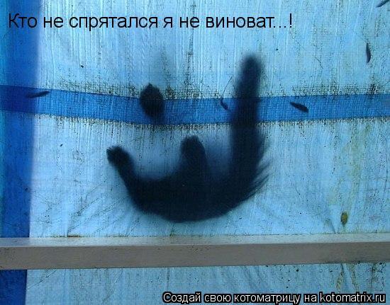 Котоматрица: Кто не спрятался я не виноват...!