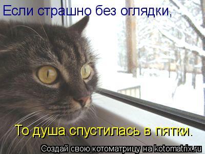 Котоматрица: Если страшно без оглядки, То душа спустилась в пятки.