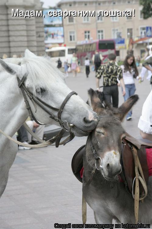 Котоматрица: Мадам, сварганим лошака!