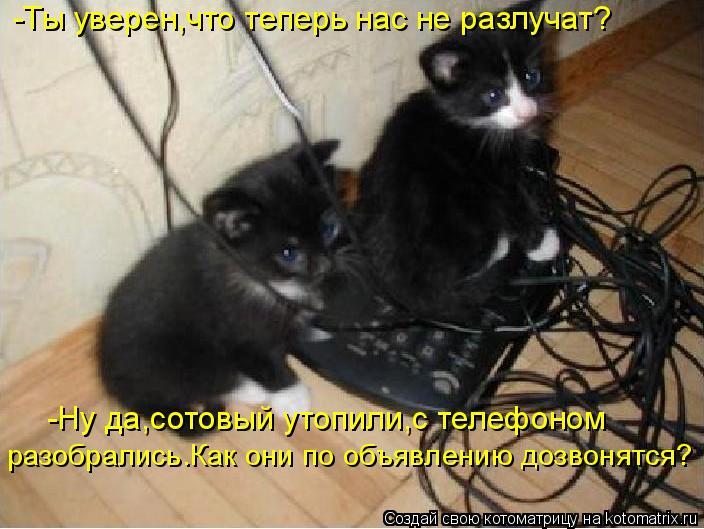 Котоматрица: -Ты уверен,что теперь нас не разлучат? -Ну да,сотовый утопили,с телефоном  разобрались.Как они по объявлению дозвонятся?