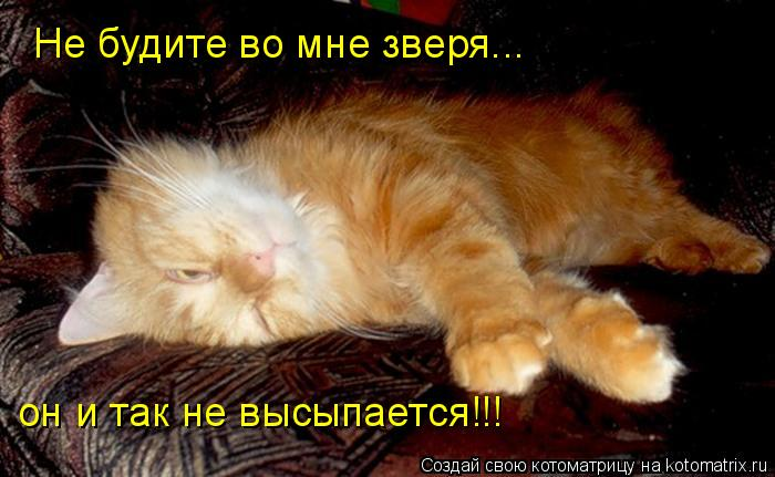Котоматрица: Не будите во мне зверя... он и так не высыпается!!!