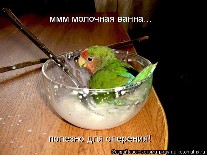 Котоматрица: ммм молочная ванна... полезно для оперения!