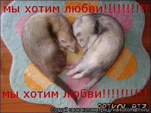 Котоматрица: мы хотим любви!!!!!!!!!! мы хотим любви!!!!!!!!!!