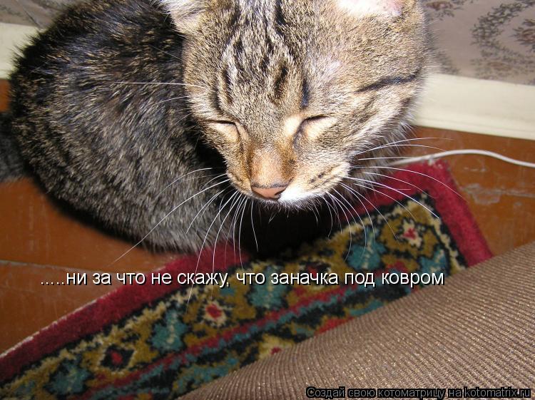Котоматрица: .....ни за что не скажу, что заначка под ковром