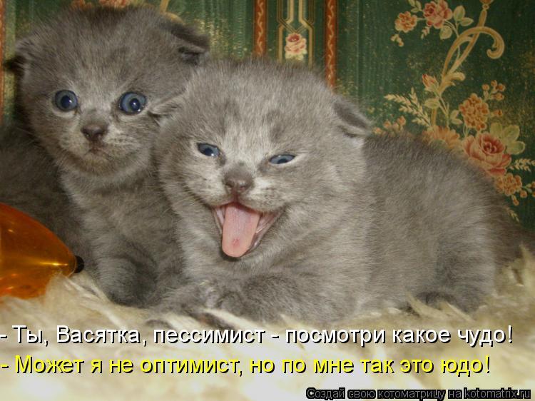 Котоматрица: - Ты, Васятка, пессимист - посмотри какое чудо! - Может я не оптимист, но по мне так это юдо!