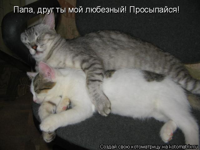 Котоматрица: Папа, друг ты мой любезный! Просыпайся!