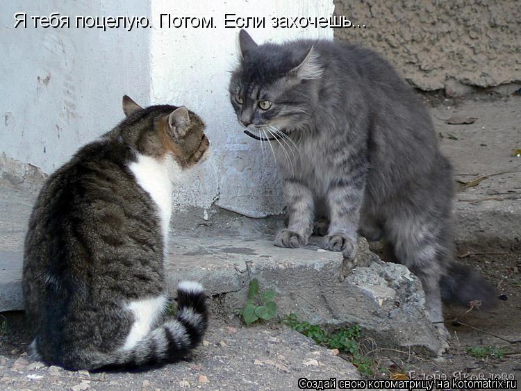 Котоматрица: Я тебя поцелую. Потом. Если захочешь...