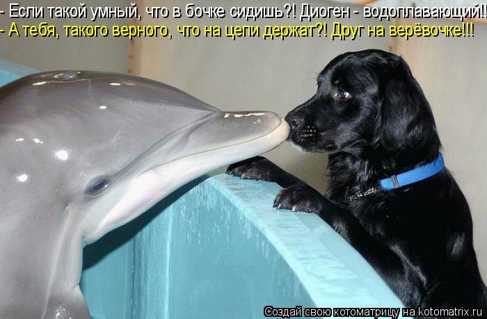 Котоматрица: - Если такой умный, что в бочке сидишь?! Диоген - водоплавающий!!! - А тебя, такого верного, что на цепи держат?! Друг на верёвочке!!!