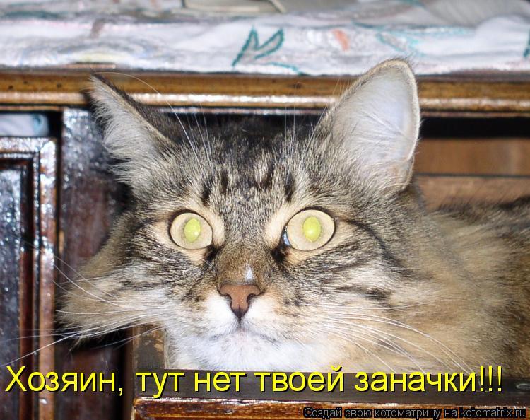 Котоматрица: Хозяин, тут нет твоей заначки!!!