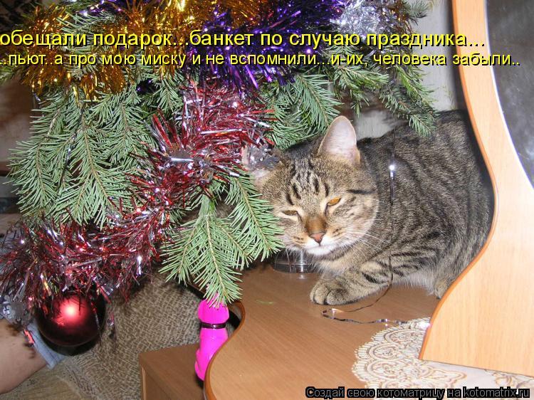 Котоматрица: обещали подарок...банкет по случаю праздника... ..пьют..а про мою миску и не вспомнили...и-их, человека забыли..