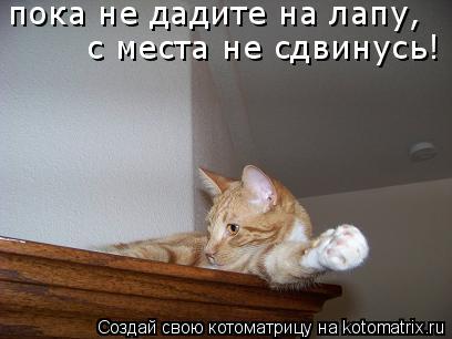 Котоматрица: пока не дадите на лапу,   с места не сдвинусь!