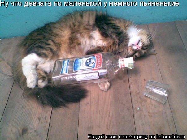 Котоматрица: Ну что девчата по маленькой у немного пьяненькие