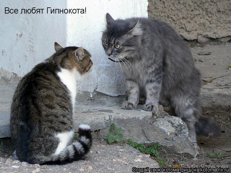 Котоматрица: Все любят Гипнокота!