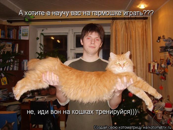 Котоматрица: А хотите а научу вас на гармошке играть??? не, иди вон на кошках тренируйся)))
